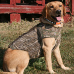 Buddy Weiser Fox Red Male Labrador