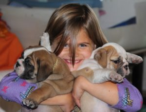 Two Female English Bulldog puppies