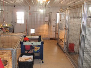 Image of the inside of Jimtown Kennels