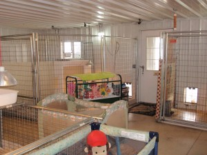 Image of inside of jimtown Kennels
